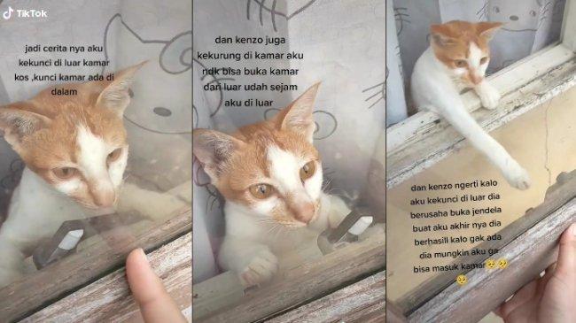 VIRAL Kucing Buka Jendela Kamar Pemiliknya yang Terkunci dari Luar, Begini Kisahnya