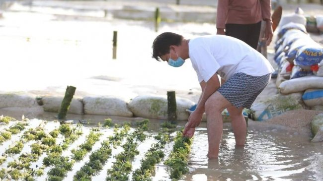 Menperin Dorong Industri Pengolahan Rumput Laut Masuk Daftar Prioritas Investasi