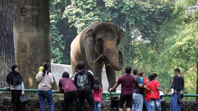 Cegah Potensi Kerumunan, Pemprov DKI Tutup Seluruh Taman dan Hutan Kota