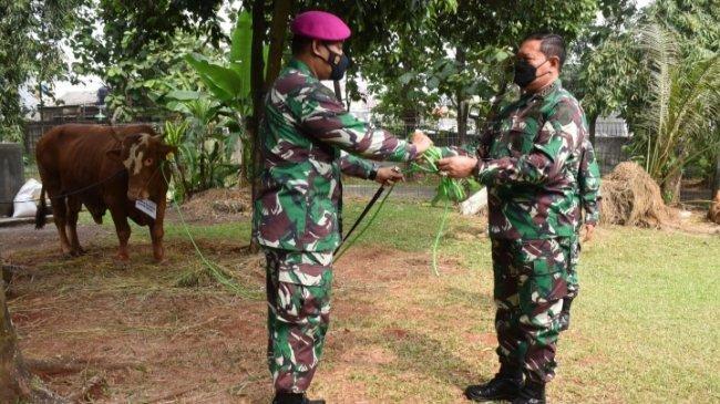 KSAL Serahkan 38 Sapi Kurban ke Dandenma Markas Besar Angkatan Laut