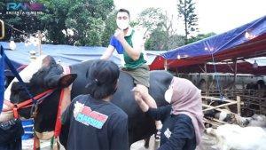Raffi Ahmad Tunggangi Sapi Berat 1,4 Ton Sebelum Dikurbankan: Sumpah Gue Takut!