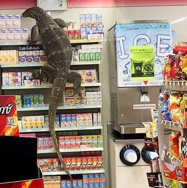 Biawak masuk mini market di Thailand