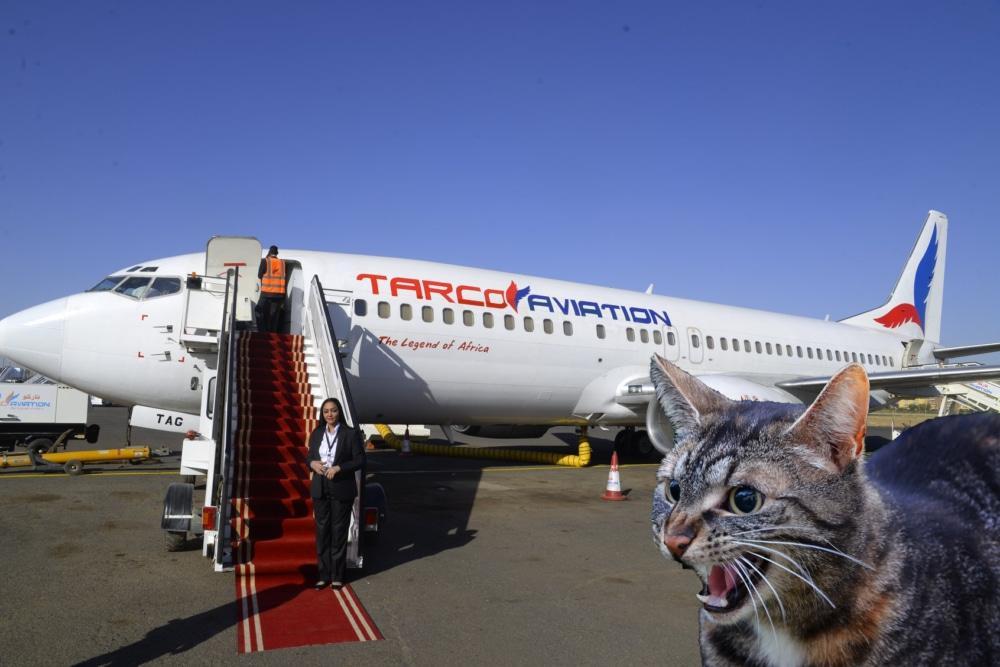 ILUSTRASI Kucing ngamuk di pesawat. Sebuah pesawat terpaksa putar balik di tengah penerbangan setelah seekor kucing dilaporkan menyerang pilot.