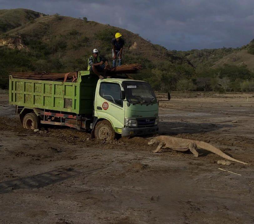komodo truk 2