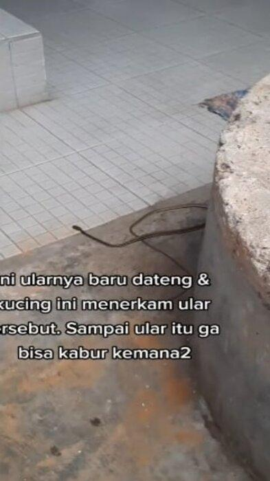ular 2