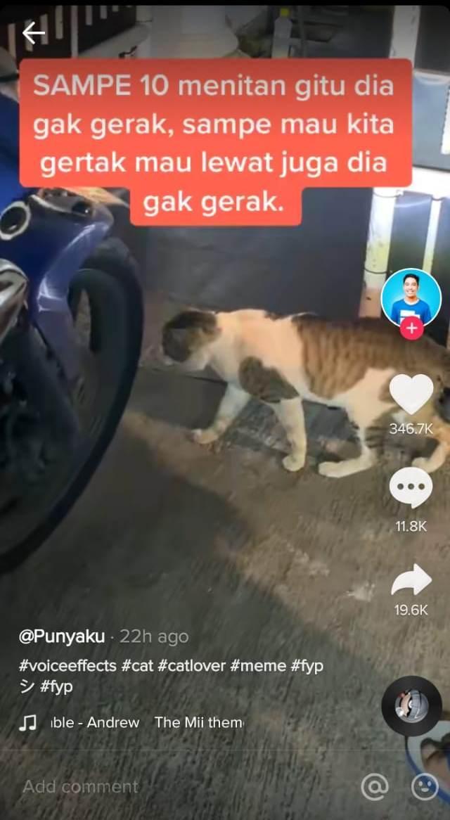 Viral video kucing terdiam dalam posisi sedang melangkah di depan pagar. Pengunggah ungkap kejadian lengkapnya.