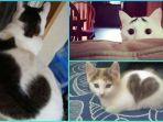 10-foto-kucing-dengan-tanda-lahir-yang-unik-ada-yang-punya-pola-hati-di-badannya.jpg
