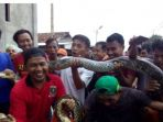 2-ular-yang-masing-masing-sepanjang-4-meter_20180501_163622.jpg