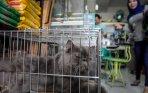 20140109_135105_harga-kucing-persia-hidung-pesek-mencapai-rp-7-juta.jpg