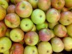 20140717_161427_buah-apel-buah-lokal-apel-manalagi.jpg