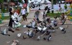 20141006_231238_burung-merpati-di-lapangan-merdeka-medan.jpg