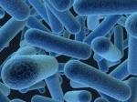 Bakteri-penyakit-kelamin.jpg