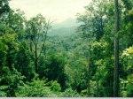 Hutan-ilustrasi.jpg