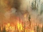 Hutan-terbakar.jpg