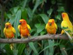 Love-Bird.jpg
