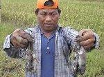 Perburuan-Tikus.jpg