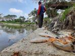 anggota-amphibi-saat-mengambil-bangkai-ikan-di-sungai-deli-rengas-pulau-kecamatan.jpg