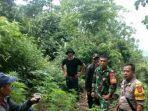 anggota-koramil-tarogong-dan-polisi-menemukan-pohon-ganja-di-kawasan-gunung.jpg