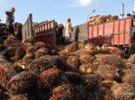 angkutan-kelapa-sawit.jpg