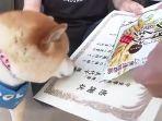 anjing-dapat-sertifikat-nih3.jpg