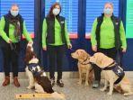 Doktor Jepang: Anjing Great River Dapat Mendeteksi Apakah Seseorang Terinfeksi Covid-19 atau Tidak
