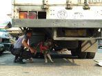 anjing-k9-polda-sumsel-yang-mengendus-bagian-bawah-truk-kontainer-un_20181003_074307.jpg