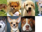 anjing-yang-kamu-pilih.jpg