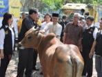 artha-graha-peduli-bagikan-hewan-qurban-ke-seluruh-indonesia_20150923_232657.jpg