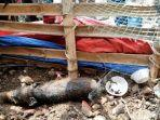 Warga Depok Sembelih Hewan Diduga Babi Ngepet yang Viral di Medsos