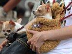 bandung-dogs-carnival_20150824_221253.jpg