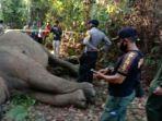 bangkai-gajah-sumatera.jpg