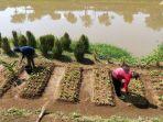 bantaran-sungai-citarum-dimanfaatkan-ditanami-sayuran_20201221_134336.jpg