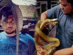 banyak-ular-kobra-masuk-perkotaan-panji-petualang-ungkap-penanganan-bukan-diikat.jpg