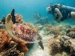 bawah-laut-pulau-lombok.jpg