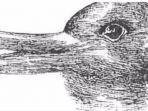 bebek-atau-kelinci.jpg