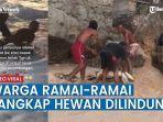 berawal-dari-video-viral-eksploitasi-penyu-7-nelayan-di-gunungkidul-ditangkap-terancam-bui-5-tahun.jpg