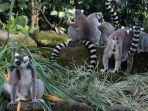 berlibur-di-bali-zoo-saat-pandemi-covid-19_20210401_084025.jpg