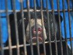 beruang-madu-berhadil-ditangkap-bbksda-riau_20150312_174509.jpg