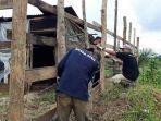 Lagi, Warga Aceh Timur Jadi Korban Serangan Harimau Rimba, Diterkam Lalu Diseret Saat Tidur di Gubuk