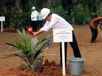 Tahun Ini, Kementan Targetkan Peremajaan Sawit 180 ribu Hektar