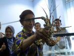 bu-susi-tunjukkan-benih-lobster-yang-gagal-diselundupkan_20190715_224411.jpg