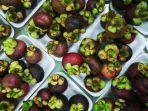buah-manggis-yah.jpg