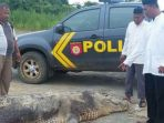 buaya-sepanjang-6-meter-yang-ditangkap-warga-desa-pembeliangan-kecamatan_20170703_151753.jpg