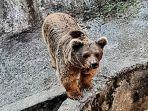 Alami Kekerasan Bertahun-tahun, Dua Beruang Berhasil Dibebaskan dari 'Kebun Binatang Terburuk Dunia'