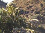 bunga-edelweis-di-gunung-lawu-karanganyar1.jpg