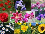 bunga-mana-yang-jadi-favoritmu-ungkap-kepribadianmu-di-sini_20180827_155458.jpg