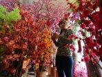 bunga-mei-hwa-sambut-tahun-baru-imlek_20160205_164445.jpg