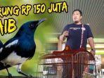 burung-kacer-rp-150-juta-hilang-di-bagasi-pesawat-kicau-mania-geruduk-kantor-garuda-indonesia.jpg