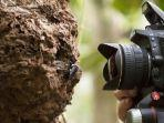 clay-bolt-membuat-foto-pertama-dari-lebah-raksasa-wallace.jpg
