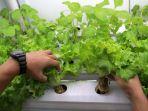 container-farming-bercocok-tanam-tanpa-tanah_20211012_134741.jpg